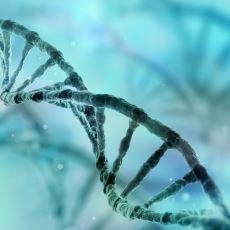 Sadece Su İçilerek Kötü Hücrelerden Kurtulmayı Öngören Nobel Ödüllü Araştırma: Otofaji Diyeti