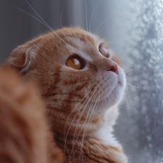 Bazı Erkek Kediler, Neden Başka Kedilerin Yavrularını Öldürür?