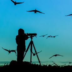 Bir Kuş Sevdalısının Gözünden: Kuş Gözlemciliği ile İlgili Merak Edilen Her Şey