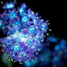 Bir Doğa Mucizesi Olan Çiçeklerin Morötesi Işık Altında Parıl Parıl Işıldayan, Göz Alıcı Görüntüleri