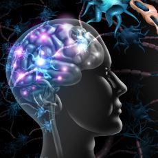 Nöroplastisitenin Son Keşfi: Deneyimlerin Beynimizdeki Nöronları Değiştirmesi
