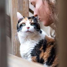 Kediler, Kendilerine Seslenildiğinin Farkına Varabiliyor mu?