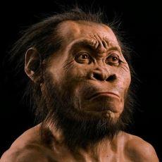 2015 Yılında Keşfedilen Yeni İnsan Türü Homo Naledi'ye Dair Bilinmesi Gerekenler
