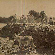 1910 Yılı İstanbul'unda 80.000 Köpeğin Kaderine Terk Edildiği Yer: Hayırsız Ada