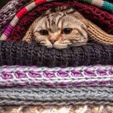 İnsana Durduk Yere Kafayı Yedirten Bir Durum: Kediyi Evin İçinde Kaybetmek