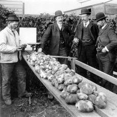 Hiç Beklenmeyecek Şekillerde Dünya Tarihini Değiştirmiş Bir Bitki: Patates