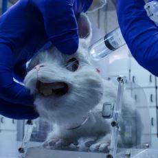 Hayvanlar Üzerinde Deney Yapmayan Kozmetik ve Temizlik Markaları