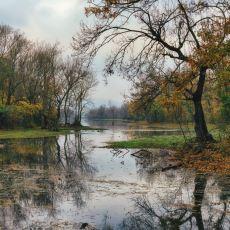 Mükemmel Olduğu Kadar Kırılgan da Olan Doğa Harikası: Longoz Ormanları