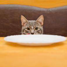 Kediler Konuşabilse Söyleyeceği Tahmin Edilen Şeyler