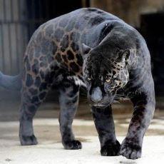 Evrim Tartışmalarını Tekrar Gündeme Getirecek Nitelikte Hayvanların Değişimleri