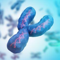 Gelecekte Yok Olacağı Öngörülen Y Kromozomuna Dair Bilinmesi Gerekenler