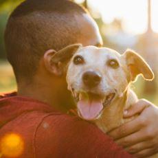 Koku Algıları Tıbbi Cihazlardan Daha Etkili Olan Köpekler Kötü Huylu Tümörleri Hissedebiliyor