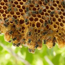 Arılar, Kovanlarının Sıcaklığını 4 Mevsim Nasıl Sabit Derecede Tutuyor?