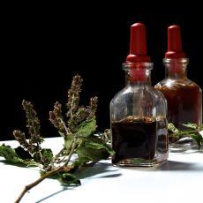 Parfüm Endüstrisinin Vazgeçilmez ve Pahalı Bitkisi: Patchouli