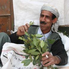 Fas - Cezayir Taraflarında Uyarıcı Etkileri Nedeniyle Çiğnenen Bitki: Yemen Otu