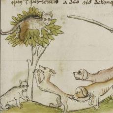 Modern Zamanlara Kadar İnsanlarla Başı Hep Belada Olan Bir Hayvan: Kedi