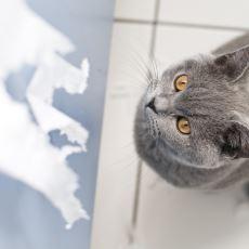 Kedi Nasıl Eğitilir?