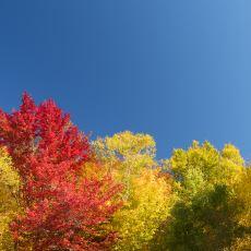 Gökyüzü, Sonbaharda Neden Daha Mavi Görünür?