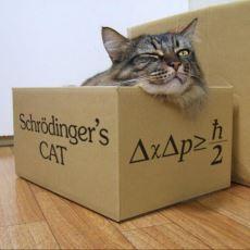 Dünyayı Algılama Biçimimizi Gösteren Schrödinger'in Kedisi'nin Anlaşılır ve Sade Bir Açıklaması