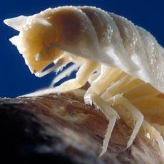 5.5 Milyon Yıl Dünya'dan İzole Kalan Movile Mağarası ve Barındırdığı İlginç Canlılar
