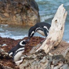 Hayvanların Oldukça Çeşitli Cinsel Hayatlarına Dair Şaşırtan Detaylar