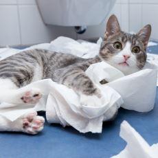 Sadece Kedi Sahiplerinin Anlayabileceği Tuhaf Deneyimler
