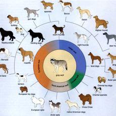 Evrim Sürecinde İnsanların da Payı Olan Köpekler Ne Zaman ve Nasıl Evrimleşti?