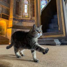 2004'ten Beri Ayasofya'nın Koruyucusu Olan Meşhur Kedi: Gli