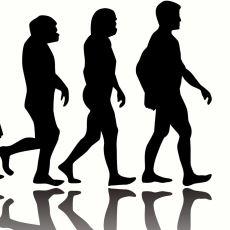 Evrimde Bireysel Seçilim mi Yoksa Grup Seçilimi mi Akla Daha Yatkın?