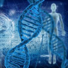İnsanın, Miras Aldığı Genetikten Bağımsız Olamayacağını Kanıtlayan Enfes Bir Yazı