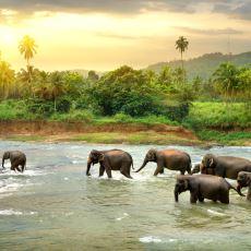 Bütün Doğallığı ve Eşsiz Güzelliğiyle Küçük Bir Ada Ülkesi: Sri Lanka