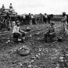 Patatesin Dünya Nüfusunun Patlamasındaki Rolü