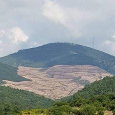 Siyanürle Altın Arandığı İçin Direniş Başlatılan Kaz Dağları'nda Neler Oluyor?