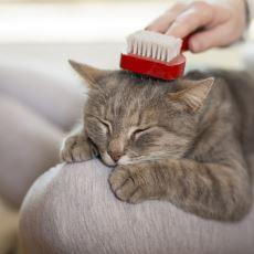 Bütün Detaylarıyla Kedi Bakımı Nasıl Yapılır?