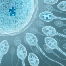 Dişinin, Önceki Partnerlerinden Aldığı Genetik Bilgiyi Bebeğine Aktardığı İddiası Doğru mu?