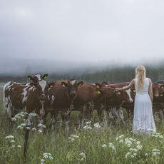 Kuzeyli Çobanların Sürülerini Çağırmak İçin Söyledikleri Büyüleyici Şarkı: Kulning