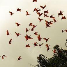 Dahil Olduğu Manzarayı Direkt Bambaşka Bir Güzelliğe Çeviren Kuş: Kızıl Aynak