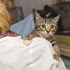 Apartmana Kedi Sokulmasını İstemeyen Yöneticiye Verilen İnsanlık Dersi Niteliğinde Ayar
