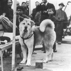 Hikayesiyle Herkesi Duygulandıran Dünyanın En Vefalı Köpeği: Hachiko