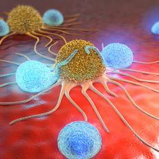 Bireysel Olarak Bir Yıkım Olan Kanser, Evrimsel Skalada Neden Ölümsüzlüğe Atılan Bir Adım?