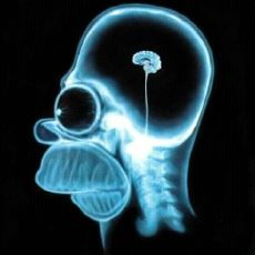 Beyni Hackleyerek, Yaptıklarınıza Göre IQ'yu Düşüren ya da Artıran Molekül: BDNF