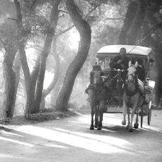 Fayton Atlarına Yapılan Muamelenin Eskiden Çok Farklı Olduğunu Kanıtlayan Bir Anı