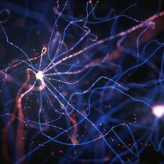 Ahlak ve İnançla İlgili Fikirlerimizin Kaynağı Olan Beyin Bölgesi: Ventromedial Prefrontal Korteks
