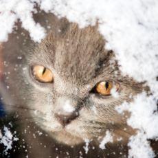 Soğuk Havalarda Sokak Hayvanları İçin Yapabileceğimiz Şeylerden Biri: Kolay Kedi Evi Yapımı