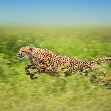 Gezegenimiz Üzerinde Yaşayan En Hızlı Hayvanlar