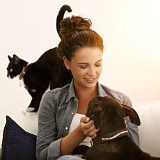Köpekler mi İnsanları Daha Çok Sever Yoksa Kediler mi? Sorusuna Bilimsel Cevap Getirildi