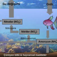 Akvaryumlarda Azot Döngüsü Nasıl Sağlanır?
