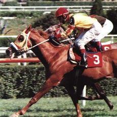 Katıldığı Çoğu Yarışı Burun Farkıyla Kazanmasıyla Bilinen Efsane Yarış Atı: Yavuzhan