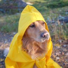 Yağmurlu Havalarda Hayat Kurtaran Yağmurluğun İcat Edilme Hikayesi
