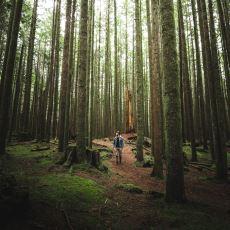 Stresi Azalttığı Bilimsel Olarak Kanıtlanan Orman Banyosu: Shinrin Yoku